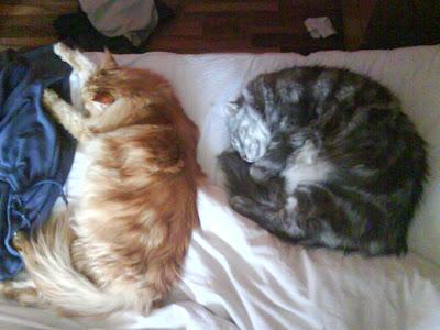 Zammy och Mille sover BREDVID varandra