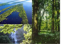 As Florestas