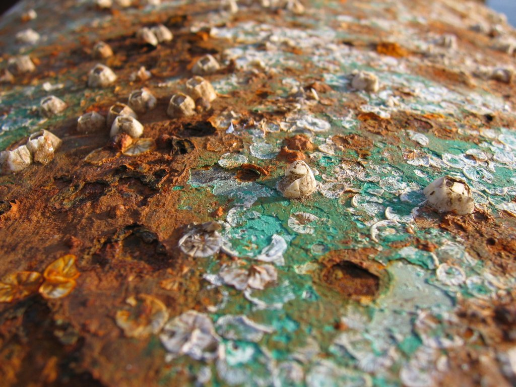 Modelo de la cubierta del hierro de la bóveda de un gazebo en el ...