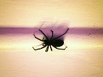 There is a big spider in my room Fine Art Photoraphy Print 6x 6