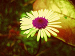 A Summer flower Fine Art Photography Print 6 x 6