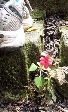 Rueli flower