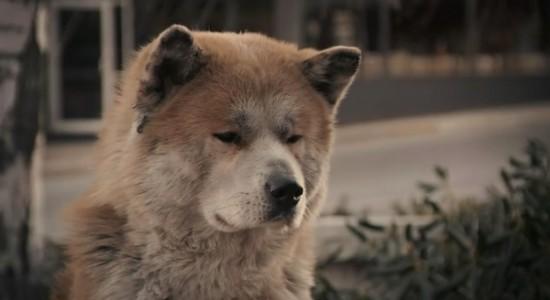 Hachiko A Dog S Story Movie