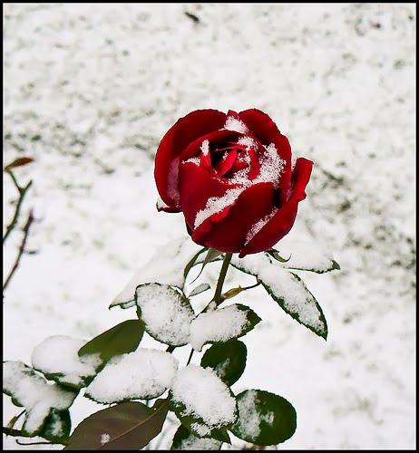 la rosa de los viento pasajes de la historia: