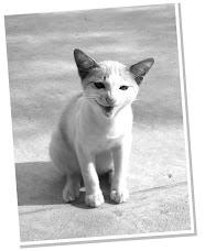 มันนี่แมวจอมกวน