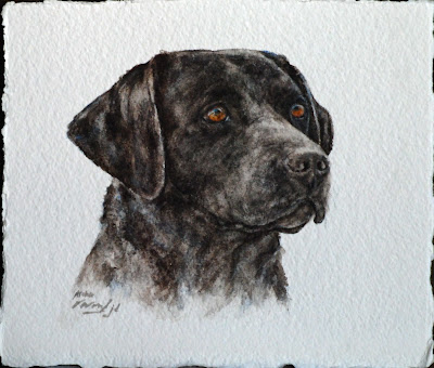 labrador - ' JASPER ' black labrador dog watercolour painting by