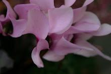 Ljuvlig lila