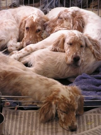 4 tired puppies after a romp ...