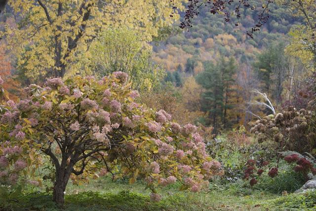 Flower Hill Farm Almost Wordless Wednesday Autumn