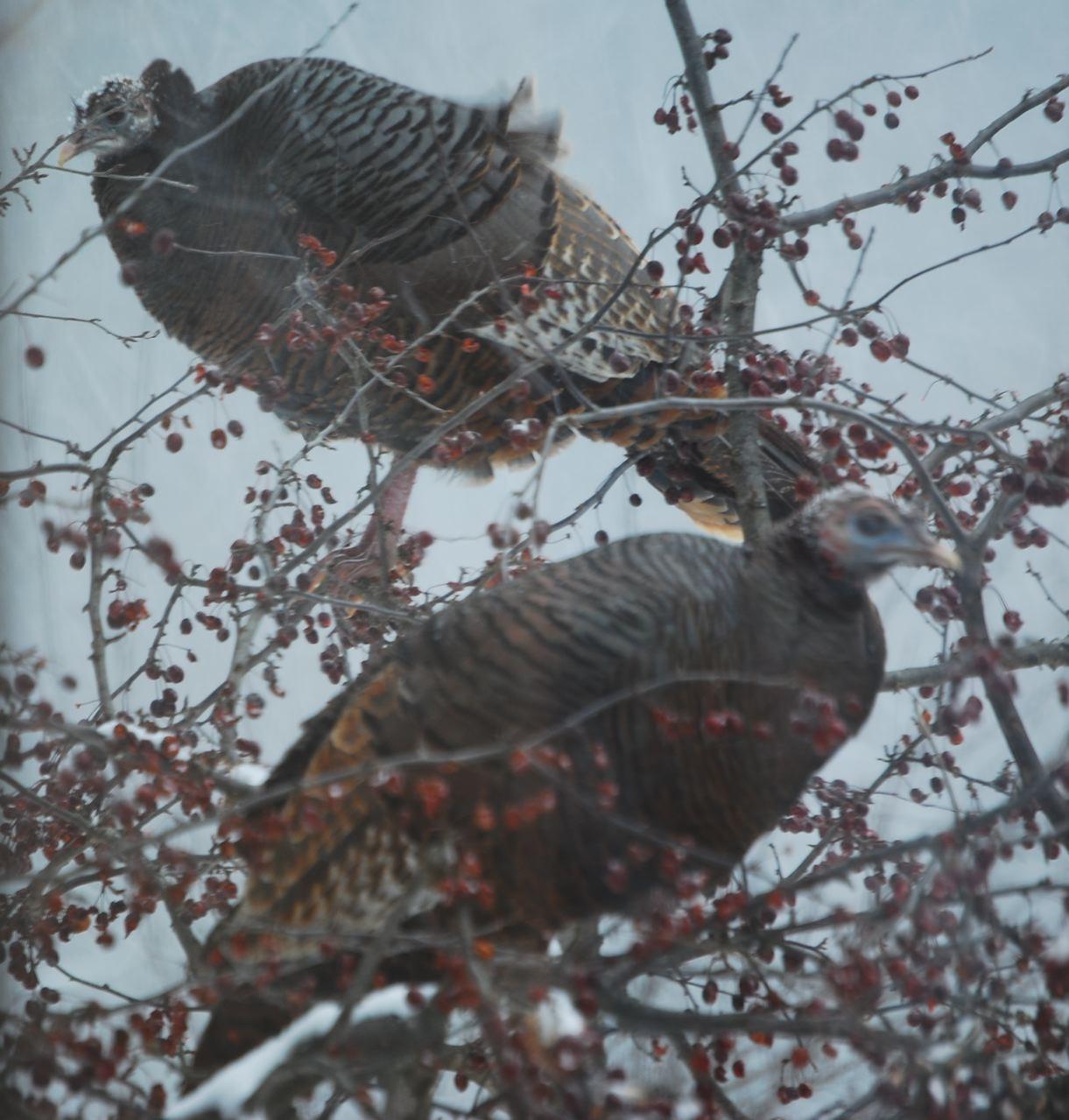 Wild Orchard Layer Cake Blackbird