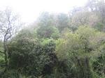 Paisaje de bosque nativo adulto denso (12-20 m. de altura)