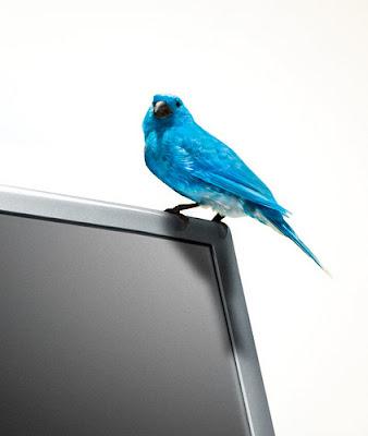 Twitter lança Twitter Tales: nossos usuários, suas histórias