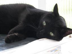Kat Napping