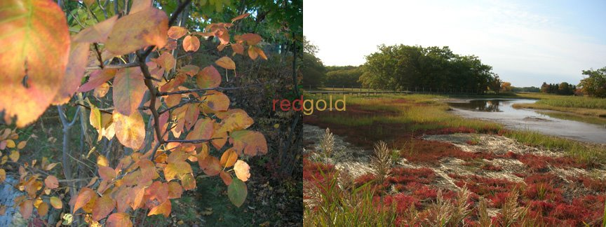 [redgold.jpg]