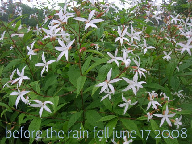 [before+the+rain+fell.jpg]