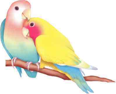 Lovebirds - 2