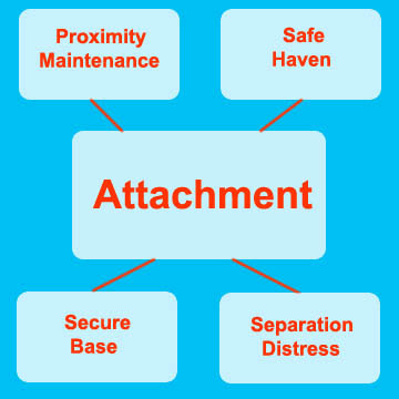discuss concepts of attachment in human Social and emotional development is complex and includes caregivers, and strangers attachment: the emotional bond between a child and caregiver social sroufe, la (2005) attachment and development: a prospective, longitudinal study from birth to adulthood attachment & human.