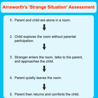 mary ainsworth attachment theory essay To gain a better insight of attachment theory mary s ainsworth developed a concept unfolding the underlying behaviors infants display towards their mothers.