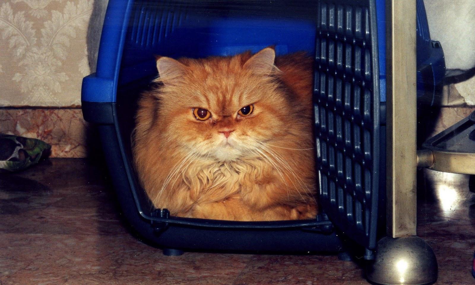 In memoria del mio gatto byron - Gatto pipi letto ...