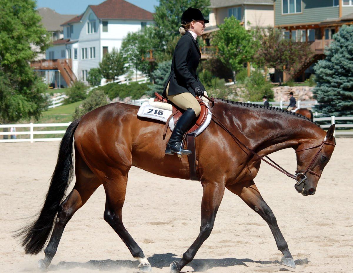 Braymere Custom Saddlery Quarter Horse Hunters Revisited