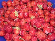 Mina jordgubbar