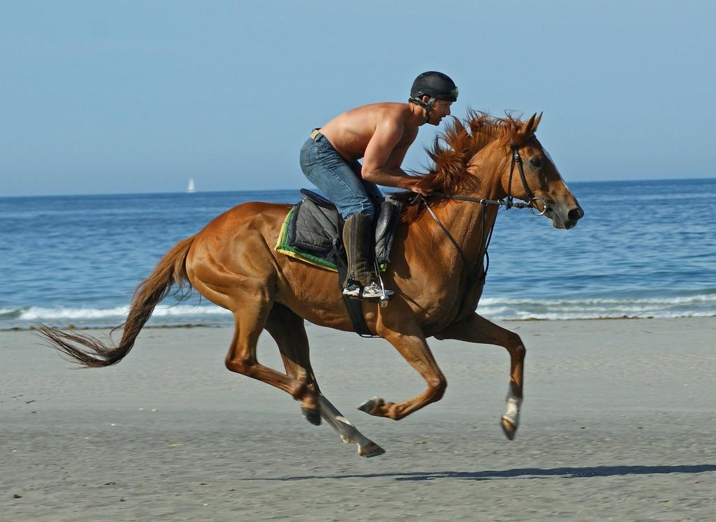 wallpapers horses. horse wallpaper, horse desktop
