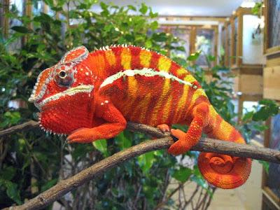 10 Hewan yang berwarna menakjubkan