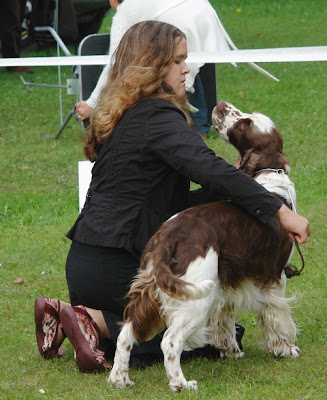 Silver Norbert Spanjelid Lauluvaljakul Spaniels On The Grounds Of Song Festivals