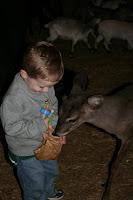 The Krashner Family: Hollywild Zoo- Christmas Lights!