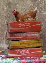 Coca-doodle-do!