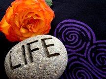 "My photograph ""L.I.F.E. Rose Labyrinth"""