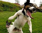 Ataque Canino!
