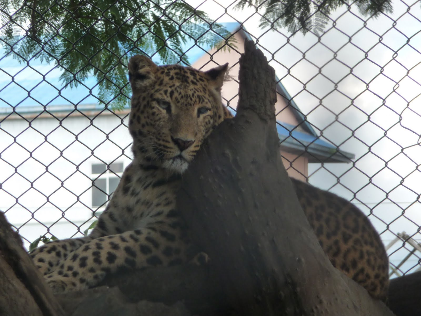 Jeg var guider zoo aarhus