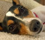 Queen of the Castle