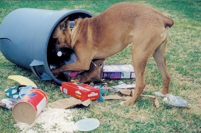BALANÇO DE FIM DE ANO - Página 3 Cachorro+lixo