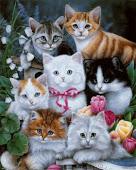 Companhia dos Gatos