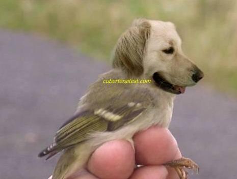 Burung spesies apa entah kahwin anjing, huh!