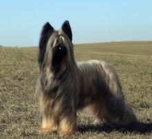 photo dogphoto.com