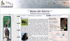http://www.oiseaux.net/oiseaux/buse.de.harris.html