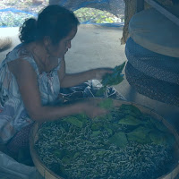 Raising silkworms in Northeast Thailand