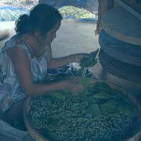 Raising silkworms in Northeast Thailand