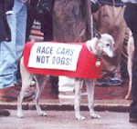 Greyhound Racing SUCKS