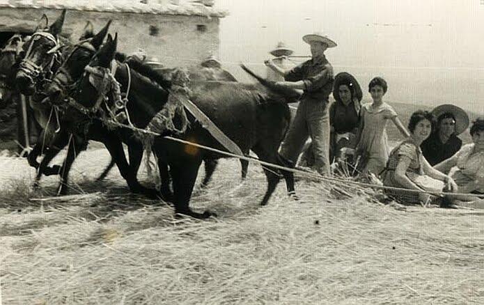 La parva en Cádiar, trillar con mulos - foto: Antonio Medina Santiago
