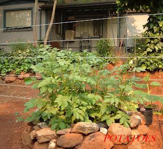 garden sight site