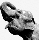 PosgtresSQL Elephant