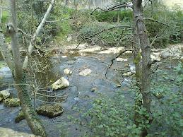 Rio Piloña por donde el Calzao (Infiesto)