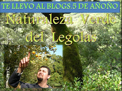 TE LLEVO A MI BLOGS. 5