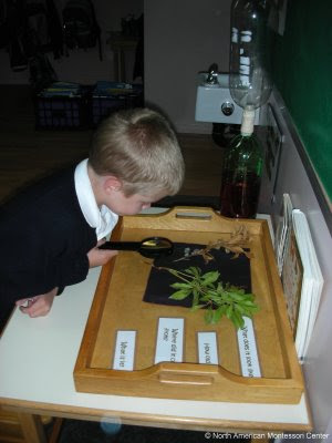 NAMC montessori prepared environment classroom six aspects explained boy studying botany