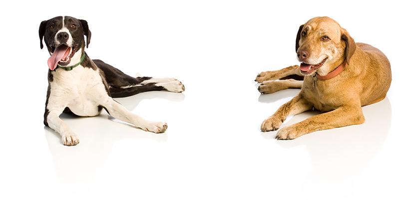 Offresi dog cat sitter a roma gliannunci for Cerco dog sitter