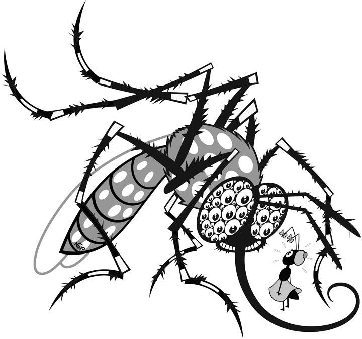 Pin Para Dibujos De Imagenes Del Mosquito Dengue Colorear on Pinterest